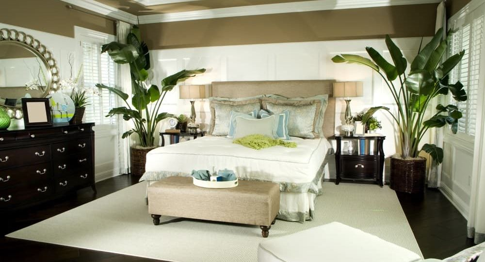 Effect of Plants in Bedroom Feng Shui (Demo)