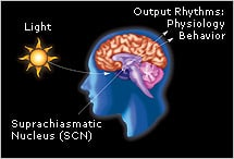Light exposure can cause our biological clock to avance or delay, which affects our sleep and wake cycle. Source: Harvard University.
